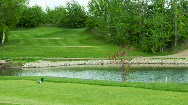 fawn-meadows-golf-and-country-club-mens